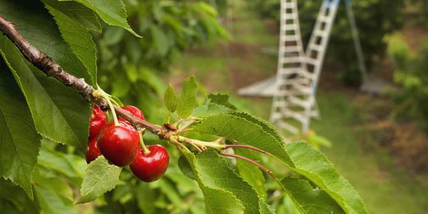 Delhaize rappelle des cerises au jus de raisin - La DH