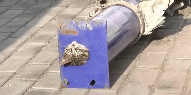 Des pompiers aident un chat coincé dans un tuyau - La DH
