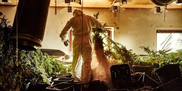 """347 plants de cannabis : """"une consommation personnelle"""""""