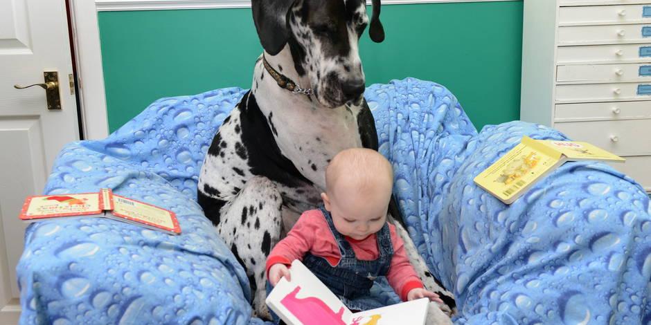 Un bébé? Les astuces pour que tout se passe bien avec son animal de compagnie