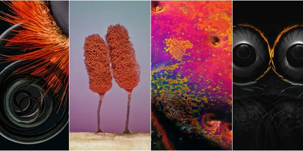 Devinez ce que représentent ces photos prises au microscope - La DH