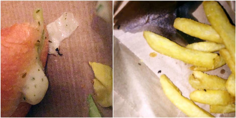 Quick : son burger et ses frites infestés de fourmis !