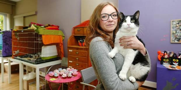Woluwe-Saint-Lambert: Le refuge pour chats CatRescue bientôt à la rue - La DH