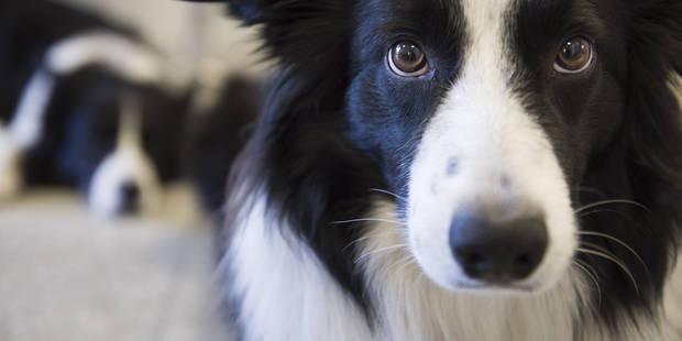 le premier bar chiens d europe a ouvert lille la dh. Black Bedroom Furniture Sets. Home Design Ideas