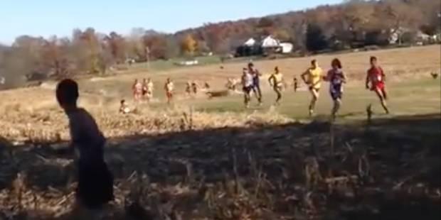 Heurté par un cerf en pleine course à pied - La DH