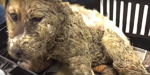 Pascal, le chiot sauvé de la cruauté (VIDEOS) - La DH