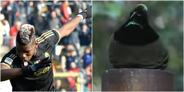 """Un oiseau aux racines du """"Dab"""" repris par les footballeurs ? (VIDEO) - La DH"""
