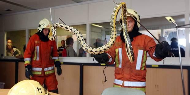 Près de deux animaux sauvés par les pompiers chaque jour - La DH