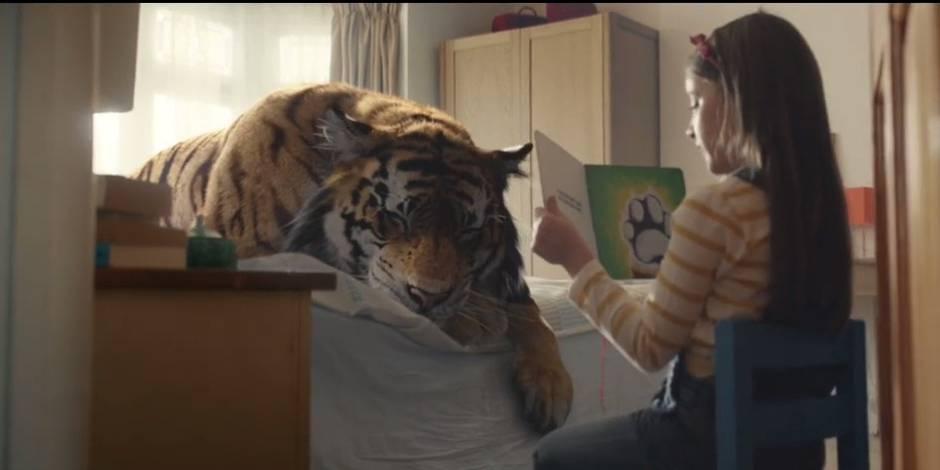 """""""Adoptez un tigre"""", et si vous soigniez chez vous un tigre blessé? (VIDEO)"""