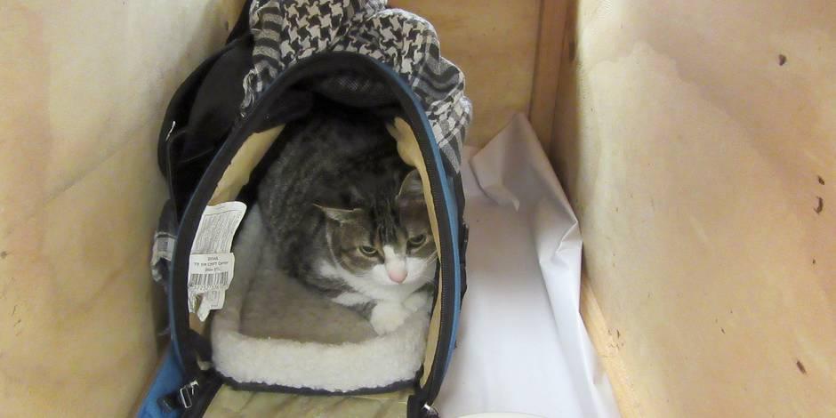 Une Canadienne tente de faire entrer son chat en Nouvelle-Zélande, mais chat n'a pas marché