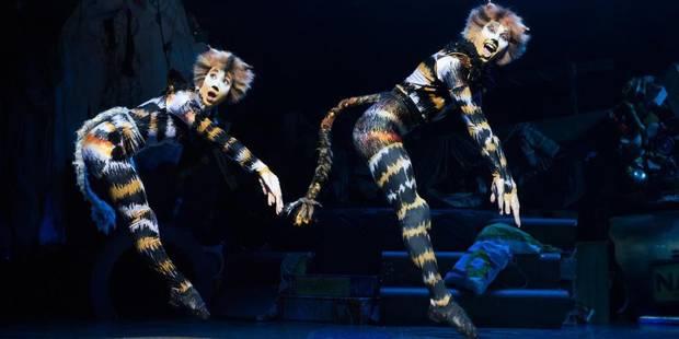 La mythique comédie musicale CATS débarque en Belgique - La DH