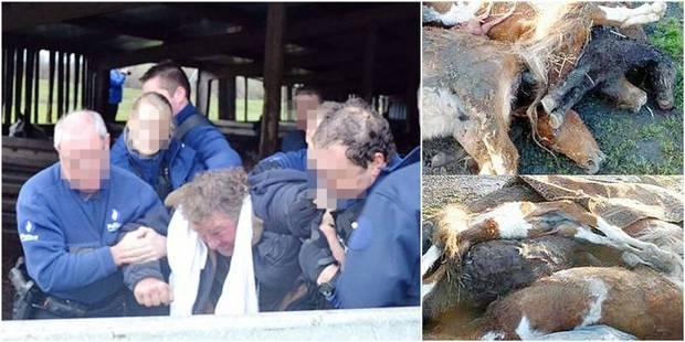 13 chevaux retrouvés morts à Bertrix: l'éleveur condamné à de la prison ferme - La DH