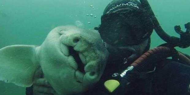 Un Plongeur S Est Lie D Amitie Avec Un Requin Photos La Dh