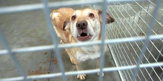 Bruxelles: La moitié des plaintes pour maltraitance concernent des chiens - La DH