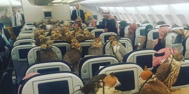Un prince saoudien installe ses 80 faucons dans un avion (PHOTO) - La DH