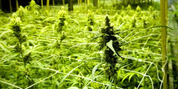Une chaîne de plantation de cannabis dans cinq appartements a été démantelée - La DH