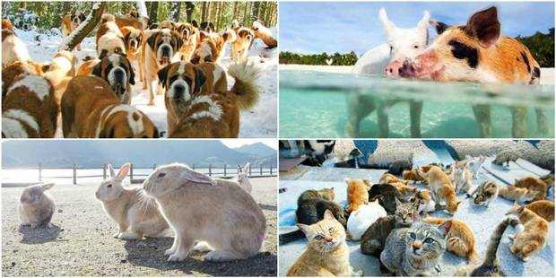 Sept lieux où les habitants ne sont que des animaux - La DH