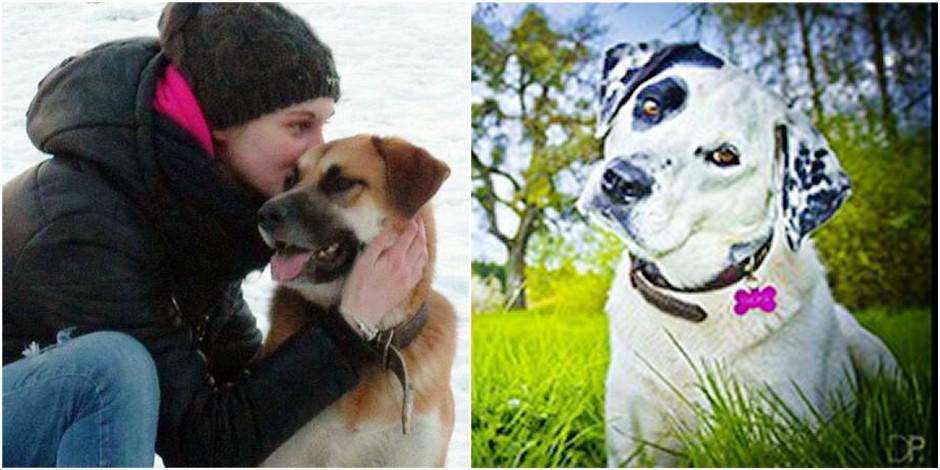 Rhode, Beersel, Linkebeek... Inquiétante vague de chiens et chats empoisonnés en périphérie! - La DH