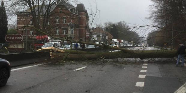 Un arbre sur la route entre Waterloo et Léonard, le ring de Bruxelles fermé (PHOTOS) - La DH