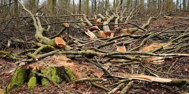 Rixensart : une pétition pour sauver le bois de Merode - La DH