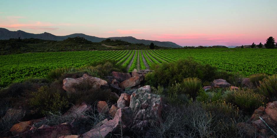 Rouseu - Des vins à l'horizon irisé