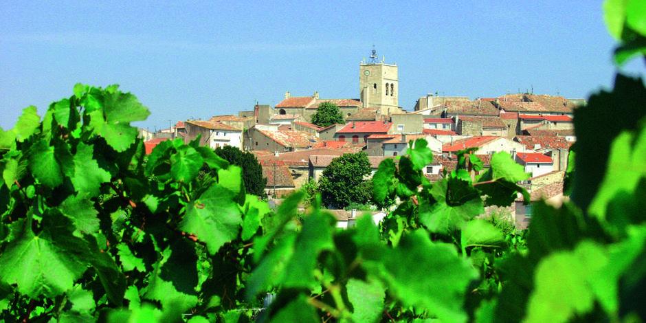 Les vins du Languedoc - une famille de vins entre nature et terroir
