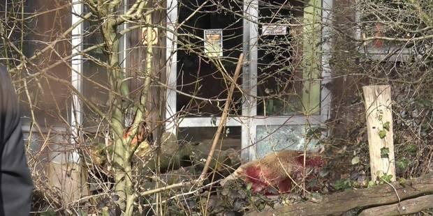 Un ours abattu après s'être enfui de son enclos - La DH