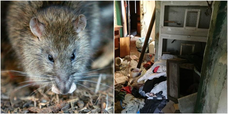 Réfugiés dans une caravane à cause des nombreux rats qui infestaient leur habitation - La DH