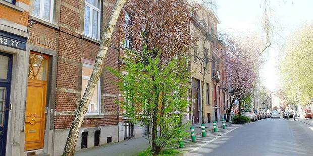 Forest: 51 arbres seront abattus rue Berkendael - La DH