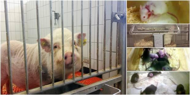 Bruxelles: les expérimentations animales seront mieux contrôlées - La DH