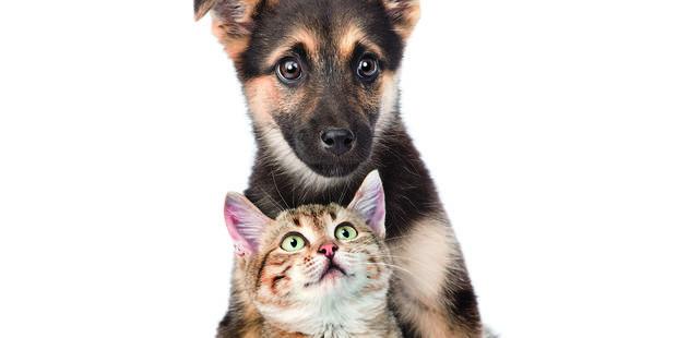 Nos chiens et chats vivent de plus en plus longtemps - La DH