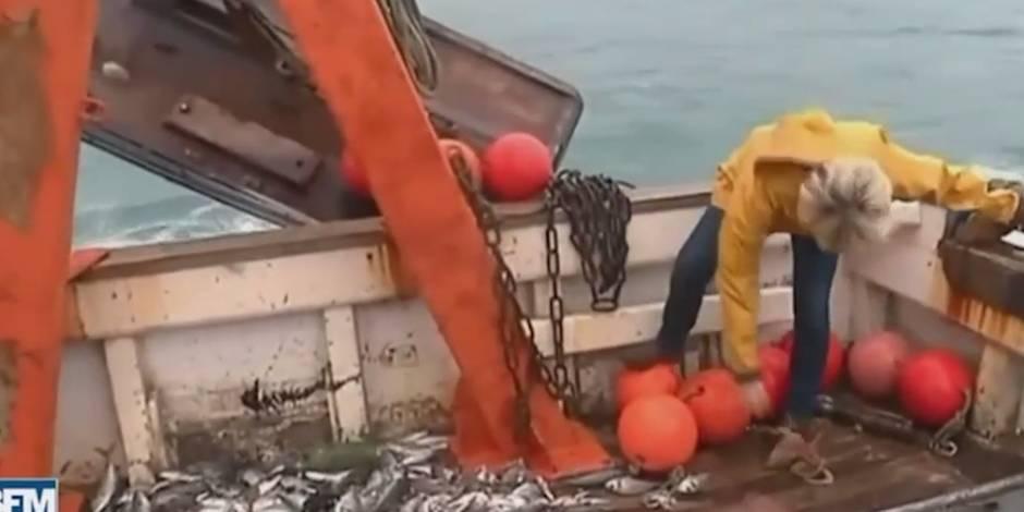 Gilbert Collard lance un poulpe sur Marine Le Pen (VIDEO)