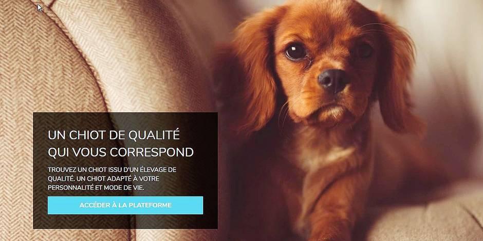 Une nouvelle plateforme en ligne permet d'acheter des chiens en toute sécurité