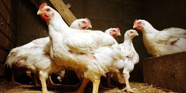 Farciennes : des poules et du bio à l'école - La DH