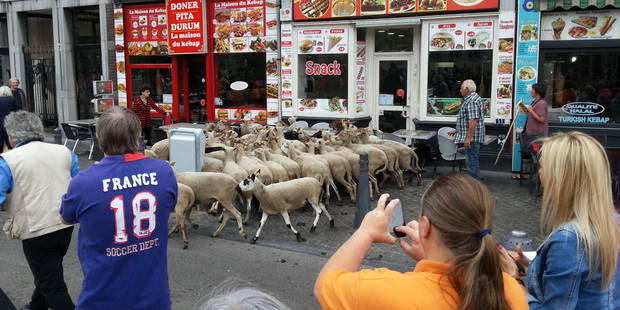 Du jamais vu à Liège : les moutons font un arrêt au kebab ! (vidéo) - La DH