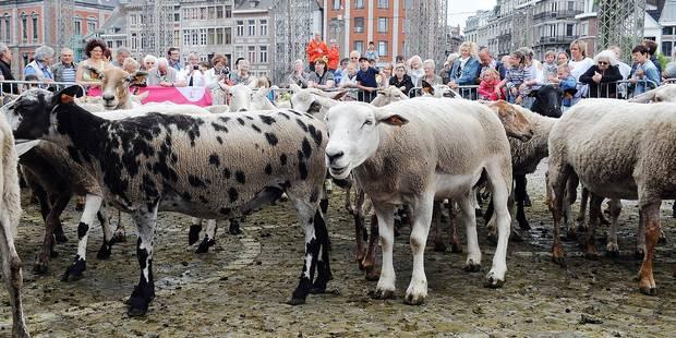 """Liège: Un troupeau de 70 moutons a élu domicile sur les coteaux de la Citadelle? après un arrêt """"kebab"""" - La DH"""