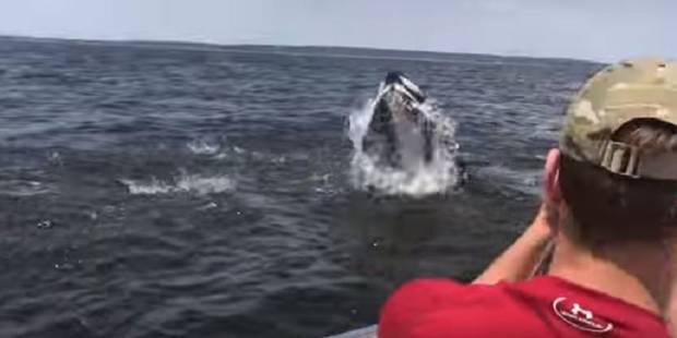 L'étonnante rencontre (de près) entre un pêcheur et une baleine dans la baie de New York - La DH