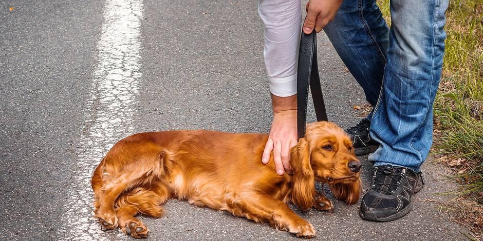 Inquiétant: toujours plus de PV pour maltraitance envers les animaux - La DH