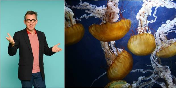Jamy révèle son secret contre les piqûres de méduses - La DH