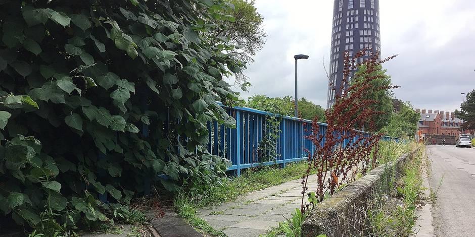 """Charleroi : """"la police doit sévir"""" pour les plantes sauvages en rue - La DH"""