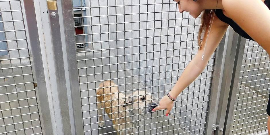 Charleroi : 85 % des chiens de la SPA sont adoptés - La DH