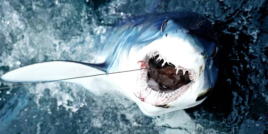 North Atlantic Monster Shark Tournament