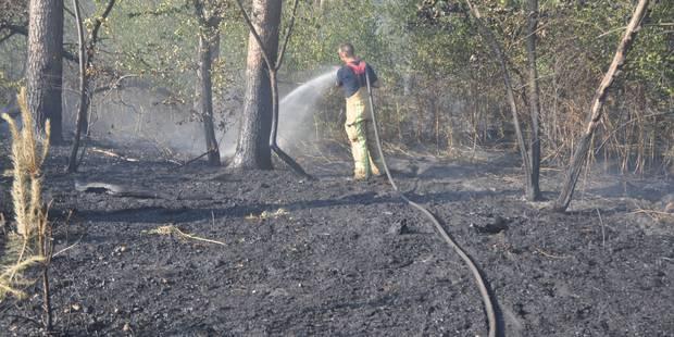 Louvain-la-Neuve: Anthony n'est pas l'incendiaire du bois de Lauzelle - La DH