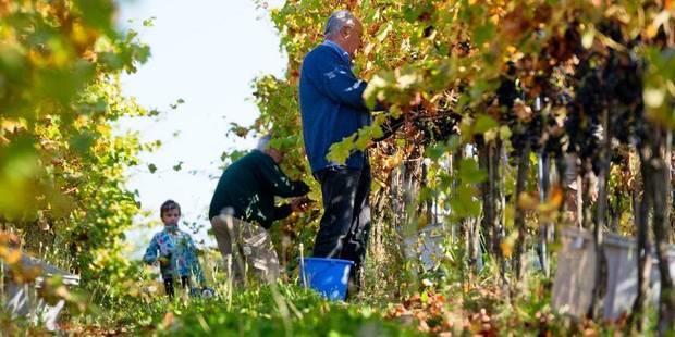Année catastrophique pour le vin français: quid en Belgique? - La DH