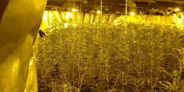 Colfontaine: un huissier tombe sur 84 plants de cannabis - La DH