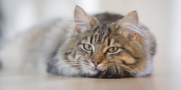 7 conseils précieux inspirés du chat pour apprendre à mieux vivre - La DH