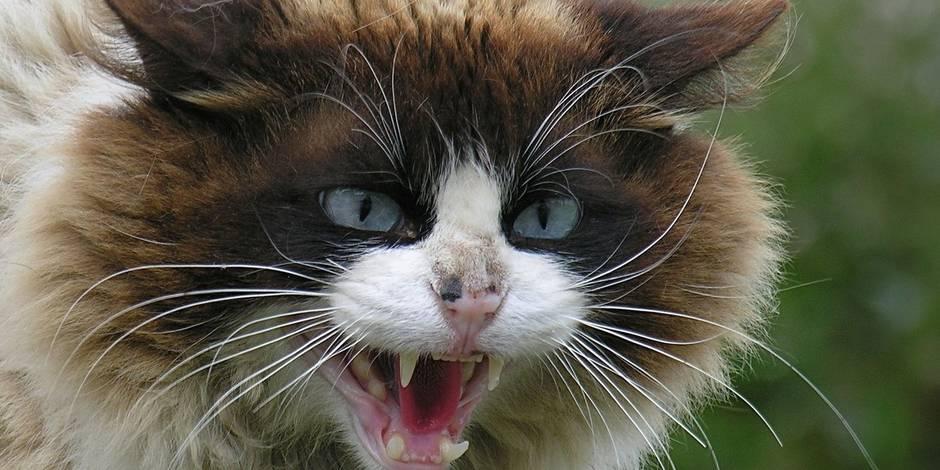 Secrètement, les chats souhaiteraient tuer leur propriétaire