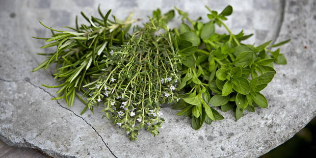 6 plantes aux effets magiques pour la santé et le bien-être - La DH