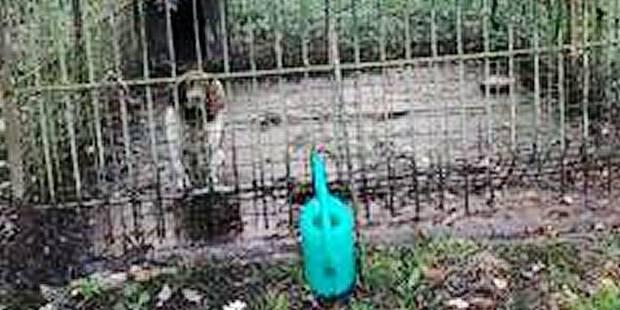Grez-Doiceau : un épagneul abandonné, couvert d'excréments - La DH