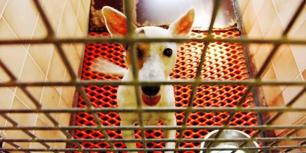 Chastre: 520 animaux recueillis durant l'été chez Sans Collier ! - La DH